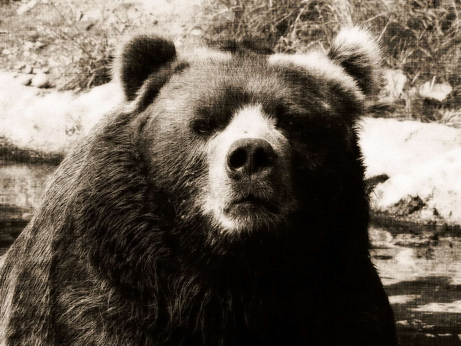 Bear Teeth Can Determine Population Status A Blog With A