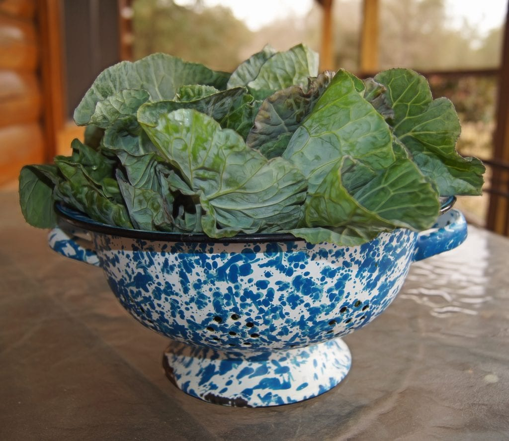 Bowl of leafy greens